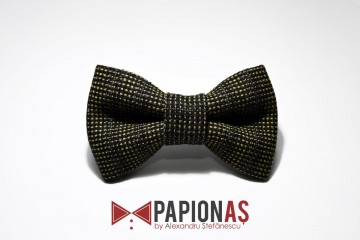 Papion Brown and yellow with navy striped