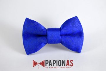 Papion Royal blue 3